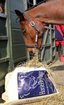 Horse eating Haylage